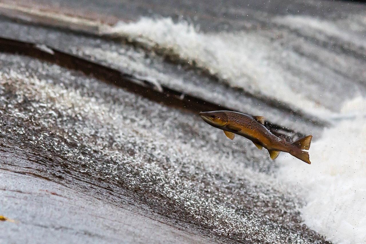 Rośnie światowa konsumpcja ryb. Portugalczycy zjadają nawet 90 kg rocznie